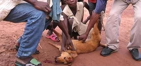 Mwene-ditu : les propriétaires des chiens appelés à faire identifier leurs bêtes dans 7 jours (Mairie)