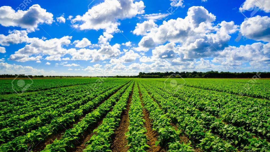 """Agriculture : le gouvernement approuve le financement du projet """"INERA"""""""