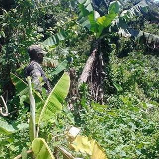 Beni : Deux cultivateurs kidnappés à Bashu